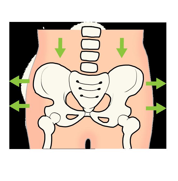 正常な骨盤のイラスト