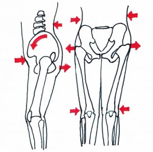 骨格とX脚の関係