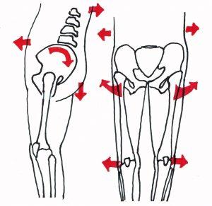 骨格とO脚の関係