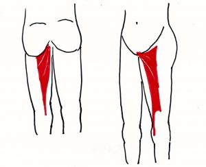 O脚改善に使う筋肉