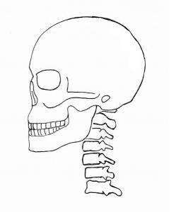 正常な状態の頸部